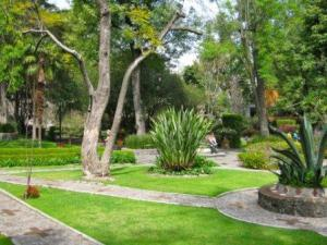 Courtyard in San Angel, Mexico City...an oasis of loveliness